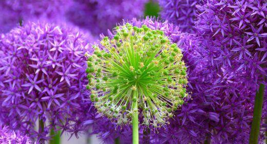blossom-139356 1920