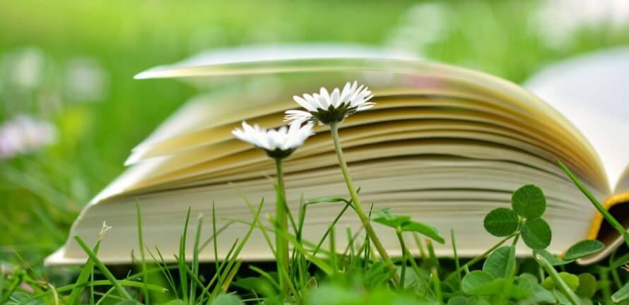 book-2304389 1920