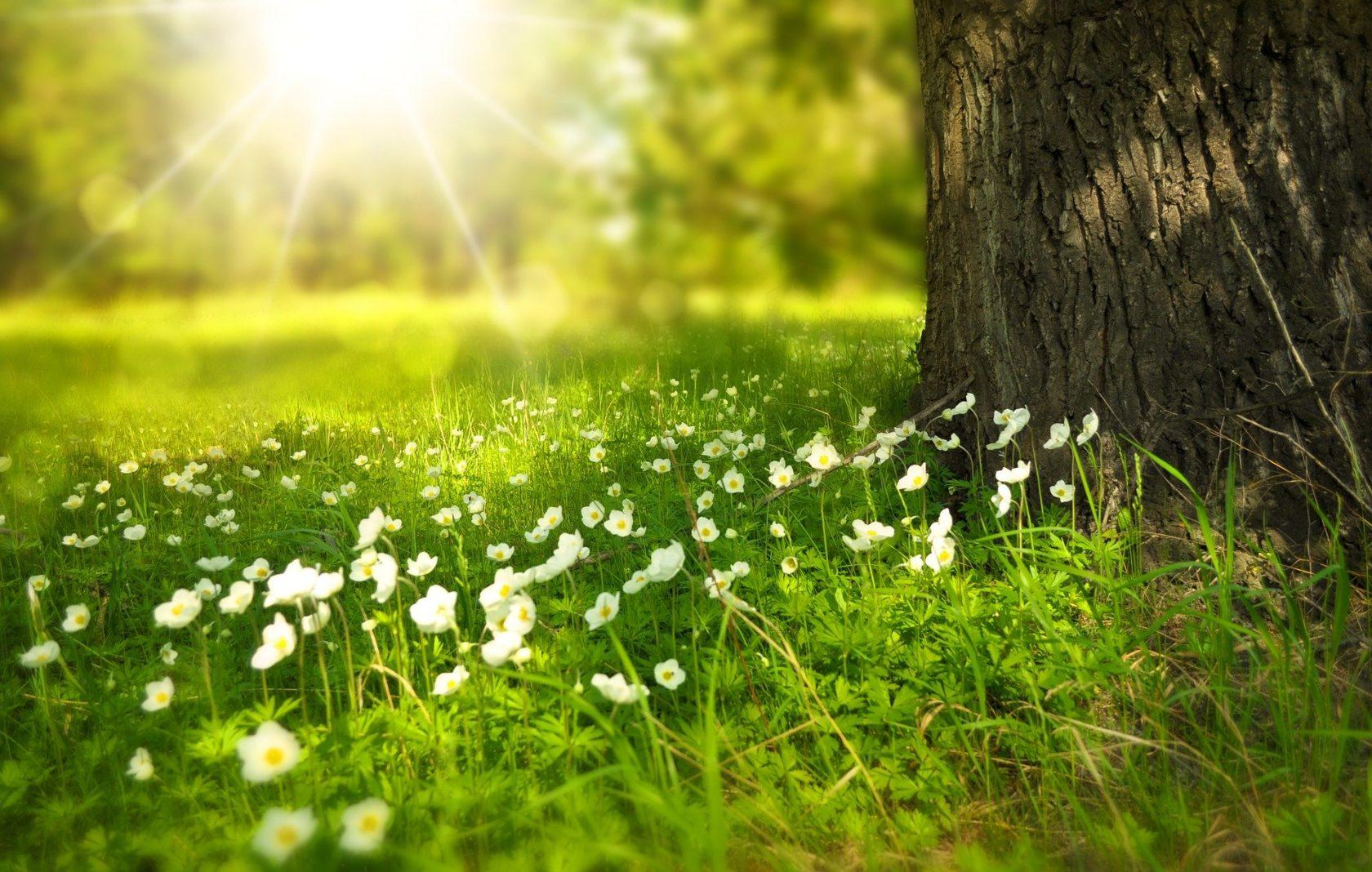 spring-276014 1920 (1)